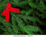 stock-photo-evergreen-bough-with-red-bow-5922727