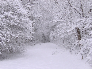 heavy_snow3