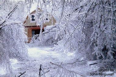 ice storm pic