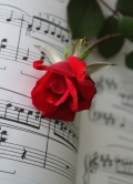 rose on music