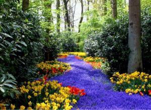 spring-flowers-flowers-31493903-1024-753