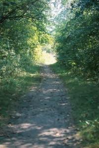 Path in Woods toward Light