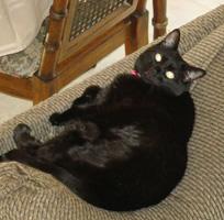 black cat named Athena