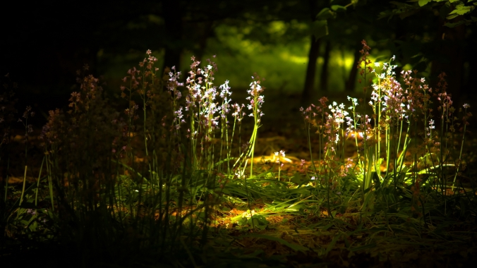 Flowers-In-The-Forest